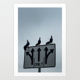 Ravens Going Strait Art Print