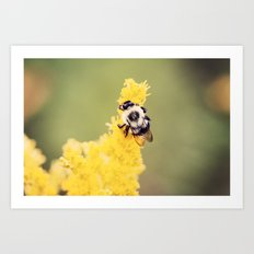 Yellow Bumblebee Art Print