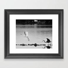 Stay, My Fair Egret ! Framed Art Print