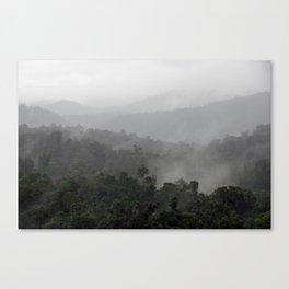 Australia Rainforest Canvas Print