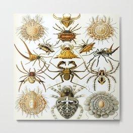 Ernst-haeckel-Arachnida Metal Print