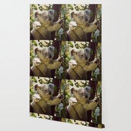 Sweet Koala Baby Wallpaper