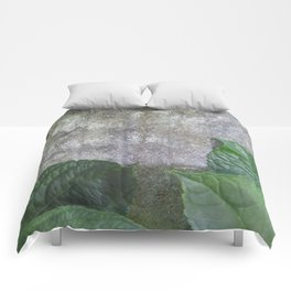 Urban Plant hydrangea leaves on concrete wall Comforters