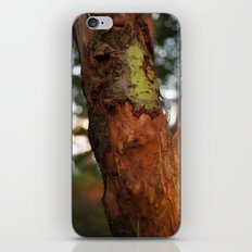 Tree iPhone & iPod Skin