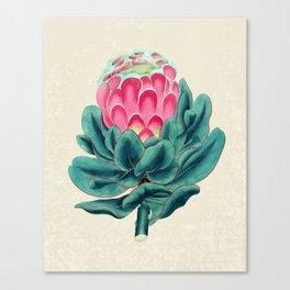 Protea flower garden Canvas Print