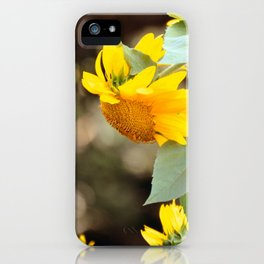 SUNFLOWER IN THE LATE AFTERNOON SUNLIGHT GLOW iPhone Case