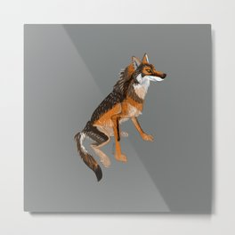 Wolves of the World: Iberian wolf (GREFA) Metal Print