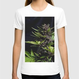 Purple Cannabis Plant T-shirt