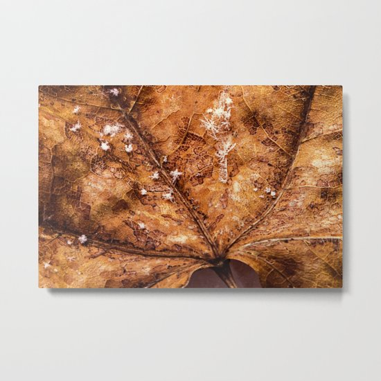 the texture of things Metal Print