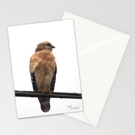 Falcon Wire Stationery Cards
