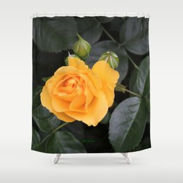 "A Rose Named ""Julia Child"" Shower Curtain"