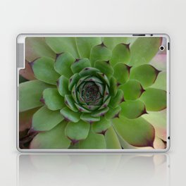 Houseleek (Sempervivum) Photo with purple tips viewed from the top dow Laptop & iPad Skin