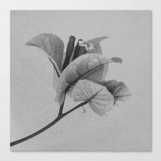 Forgotten No. 1 Canvas Print