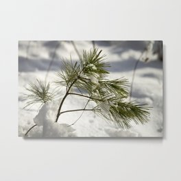 Braced for a Maine Winter Metal Print