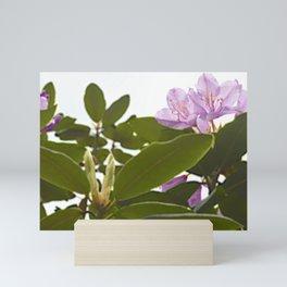 Pink Azalea Flowers with Spring Green Leaves Mini Art Print