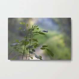 Another path Metal Print