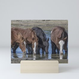 Mustangs Sharing What's Left of the Water Mini Art Print
