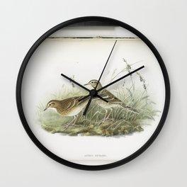 132 Anthus Richardi. Richards Pipit Wall Clock