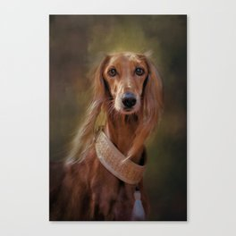 Saluki Portrait Of The Ancient Hound Canvas Print