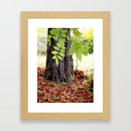 Bijoux d'automne. Framed Art Print