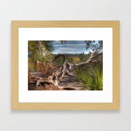 Driftwood twisted and bent Framed Art Print
