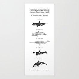 II. The Octavo Whale Art Print