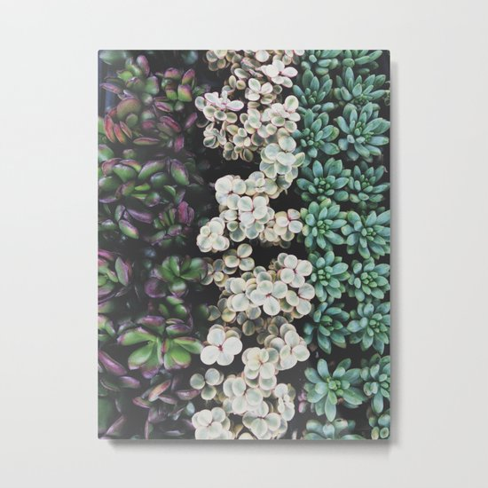 Succulent (4) Metal Print