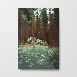 Melody of the Forest. Metal Print