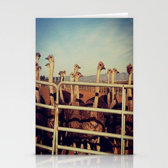 Ostrich Farm Stationery Cards