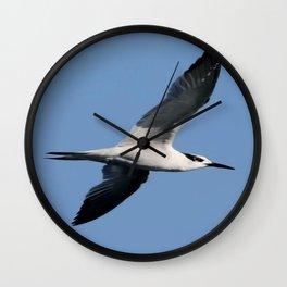 Sandwich Tern In Flight Vector Wall Clock
