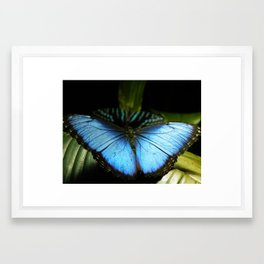 Blue Butterfly Framed Art Print