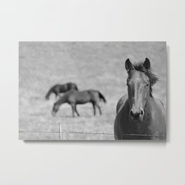 Extremely Photogenic Horse B&W Metal Print