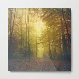 fall morning forest Metal Print
