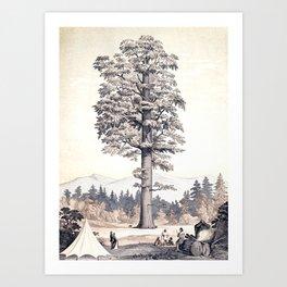 L'Illustration horticole Art Print