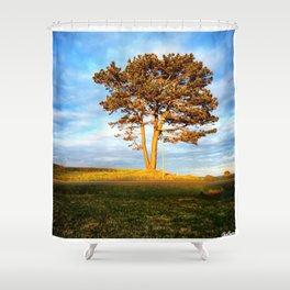 Tree In Spotlight Shower Curtain