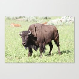 King of the Range Canvas Print