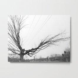 Between the lines: Nature vrs Human Metal Print
