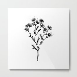 Wild Carrot Wildflower Metal Print