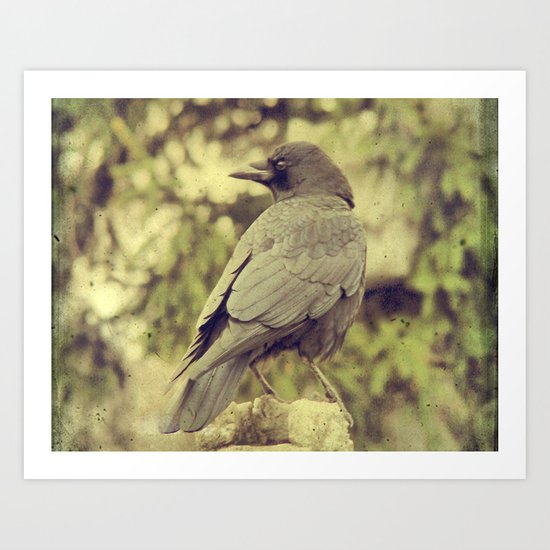 Summer Crow Art Print