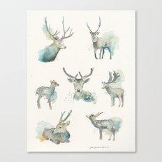 Deer Study Canvas Print