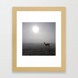 Llama in the mountains of Peru Framed Art Print