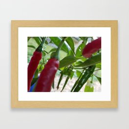 My favorite spice Framed Art Print