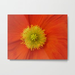 Poppy Love... Metal Print