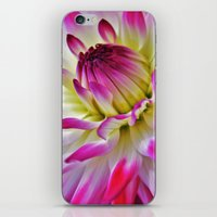 dahlia iPhone & iPod Skins featuring Dahlia by Astrid Ewing