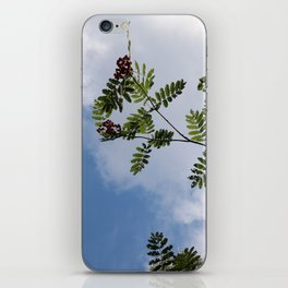 Berries in the sky 2 iPhone Skin