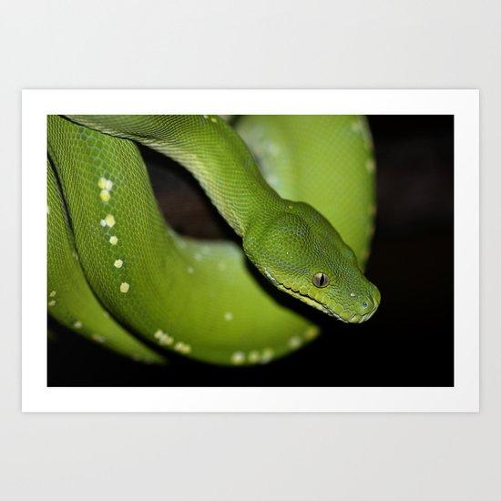 Green Python Portrait 2 Art Print