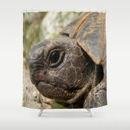 Close Up Side Portrait Of A Turkish Tortoise Shower Curtain