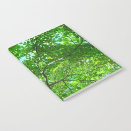 Canopy of Green, Leafy Branches with Blue Sky Notebook