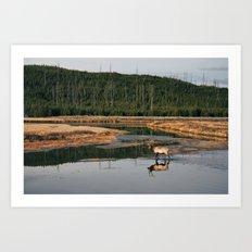 Bull Elk Crossing a River in Yellowstone Art Print