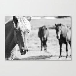 B&W horses Canvas Print
